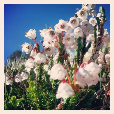 PCT flowers