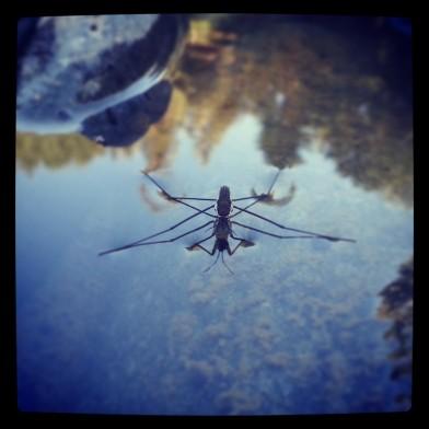 PCT waterbug