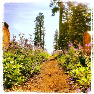 PCT Trail shot
