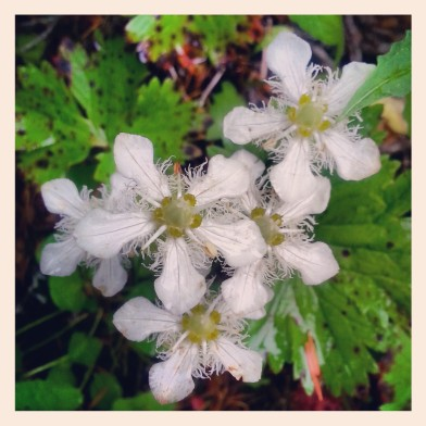 PCT Fuzzy Flowers