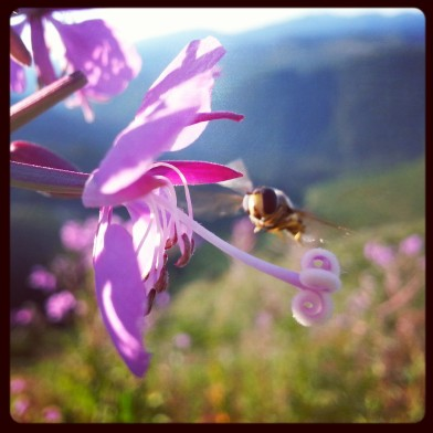 PCT bee and flower